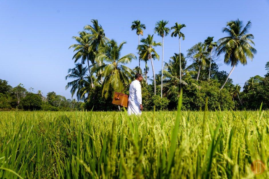 Amangalla, Sri Lanka - Cinnamon Tour Picnic