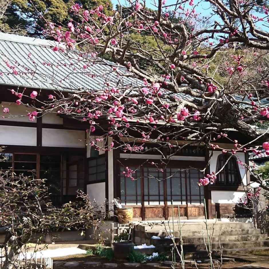 Samurai Project Kamakura