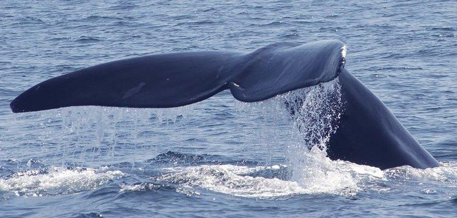 amangalla-whale-watching